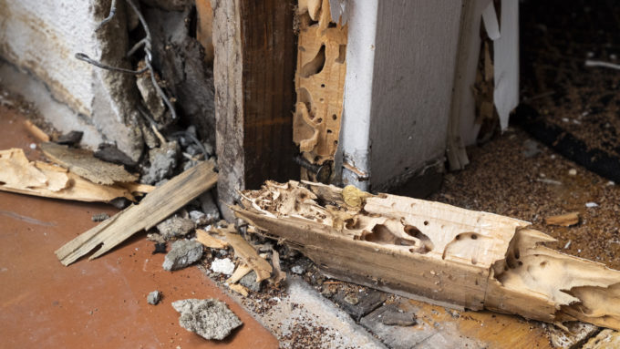 dry rot termite damage